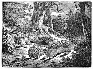 pink fairy armadillo family in the deep vegetation of a forest, scientific name is Chlamyphorus truncatus. Old Illustration by unidentified author published on Magasin Pittoresque Paris 1834