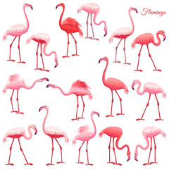 Pink flamingo set. Exotic birds in different poses, decorative elements collection. Isolated vector illustration on white background.