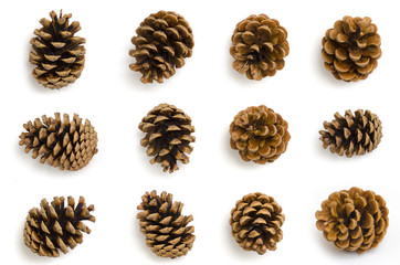 Pine cones set isolated on white