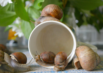 beautiful unusual tender composition: snails in a mug and on a table, macro