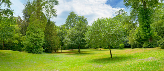 Beautiful meadow covered with grass in the park