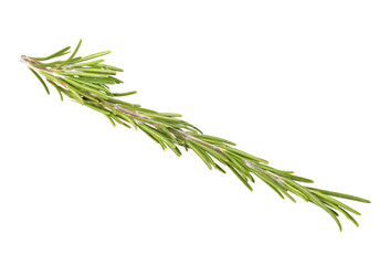 Green rosemary on white background