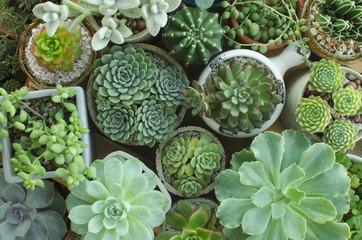 Various of Houseplant Flowering Succulent plant pots background top view