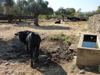Pueblo abandonado de Granadilla en Caceres ( Extremadura, España)