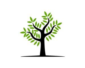 Tree green solution