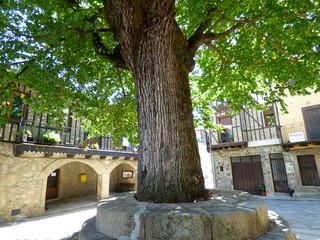 Arbol en Herguijuela de la Sierra, pueblo de Salamanca  (Castilla y León, España)