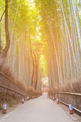 Bamboo forest with walking way tropical forest, natural landscape background