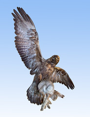 Flying predator carries prey. The eagle hunting hare on blue background. Imperial eagle - Aquila heliaca bird of prey kill coney. Bird flying with prey in its talons.