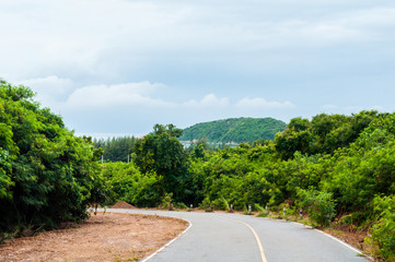 Curved asphalt road between green forest with scenic view