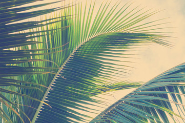 Abstract background with close up coconut palm leaves with warm color effect