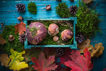 Autumn forest composition mushrooms basket