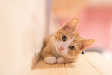 Foto op Canvas Kat cat