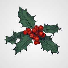 Holly Berry Vector Illustration