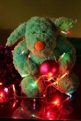 Funny Teddy bear and Christmas lights
