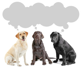 Cute Labrador Retriever dogs and space for text on white background
