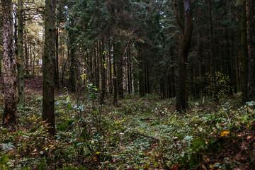 Herbstlicher Wald-Spaziergang in Norddeutschland