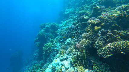 Tuinposter Onder water beautiful coral reef