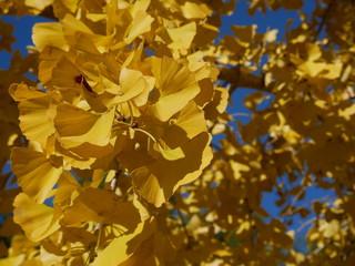 feuilles d'automne jaune saison