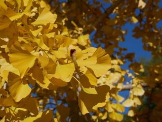 feuilles d'automne jaunes saison