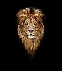 Printed roller blinds Lion Portrait of a Beautiful lion, lion in dark. Portrait of a leader. king