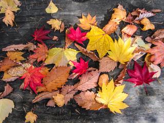 紅葉 落ち葉 国設滝野すずらん丘陵公園