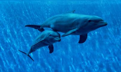 Dolphins swimming in aquarium