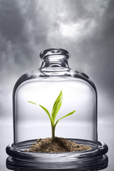 Green sprout under the protection of a glass cap. Environmental conservation concept