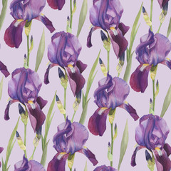 Floral seamless pattern with hand drawn watercolor violet iris