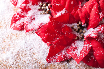 Christmas decoration, red poinsettia sprinkled with snowflakes.