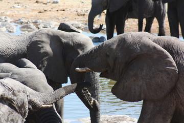 Elephants kissing