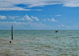 Southernmost point of Key West, Florida, which is also the southernmost point of the US, with pelicans and swimmer