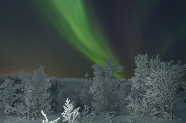 Snow on the trees and Aurora,Northern lights in the night sky.