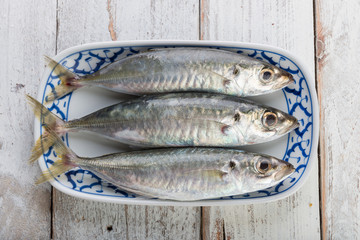Fresh mackerel fish in plate