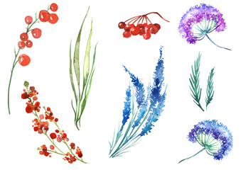 Watercolor set of plants, leaves, wild grasses, branches, red berries. Bunch of mountain ash, red currant, spruce branch, rosemary, lavender, dandelion, wild onion, dried flower, blue flower, juniper.