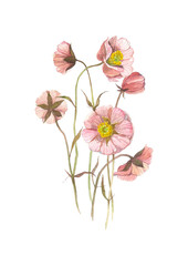 Wild flower. Watercolor floral illustration. Botanical decorative element. Flower concept. Botanica concept.