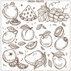 Fruits sketch vector icons farm fresh exotic tropical fruit set