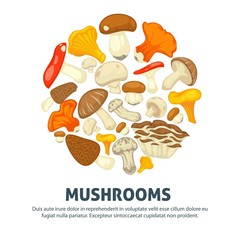 Edible mushrooms flat vector poster of forest champignon, chanterelle and exotic truffle mushroom