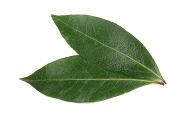 laurel leaf isolated on white background. Fresh bay leaves. Top view