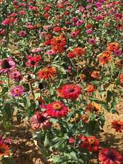 colorful flowers field beautiful nature background.