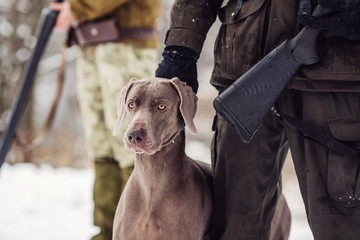 hunter and his weimaraner dog by a river in the winter hunting season.