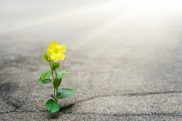 Yellow flower growing on crack street, hope concept Wall mural