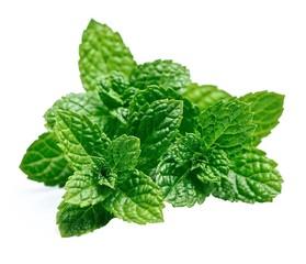 Mint leaf closeup .