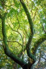 深い森の大きな木