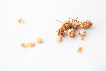 small roses on white background and place for signature