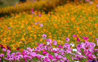 Winter flower garden