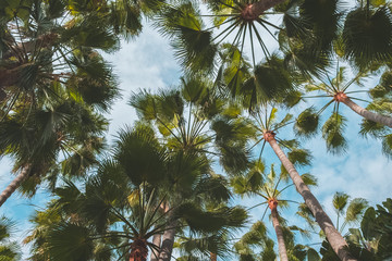 palm trees on blue sky - tropical background