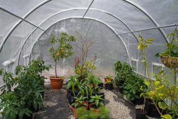 Interior of polytunnel