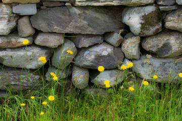 Old Stone Wall in Ireland