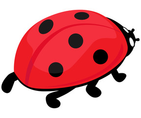 vector illustration of cute realistic ladybug