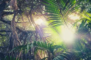 inside rainforest ,sunburst through palm trees